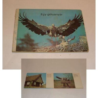 Egy gólyanyár - retro képeskönyv