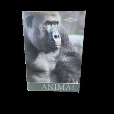 A5-ös majmos kockás füzet -Pátria - 27-32 - ÚJ